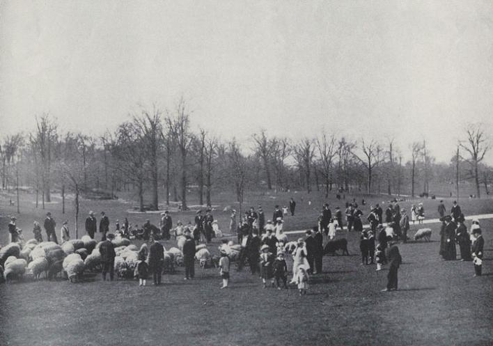 Sheep Meadow 1900-1910