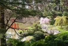 Cherry Blossom at Brooklyn Botanical Garden