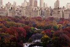 New York Autumn in Central Park