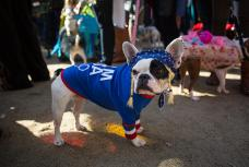 Halloween dog parade in New York