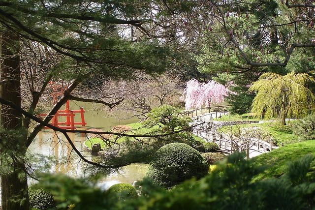 Cherry Blossom at Brooklyn Botanical Garden