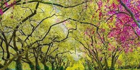 Spring in Central Park