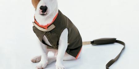 Dog Rain Gear